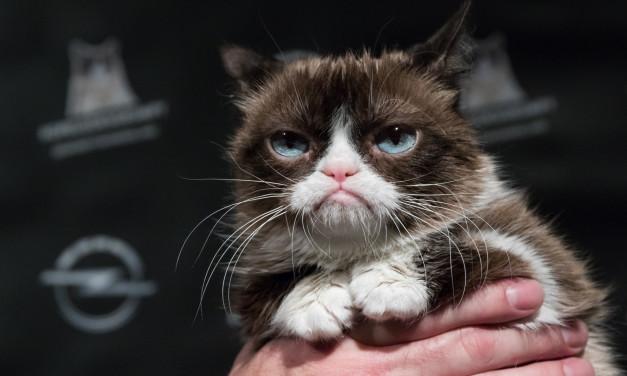 Grumpy Cat odwiedza wernisaż z okazji premiery kalendarza Opla na rok 2017